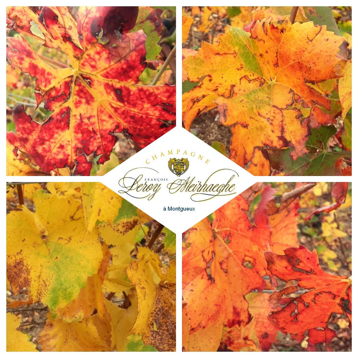 automne-leroy meirhaeghe1